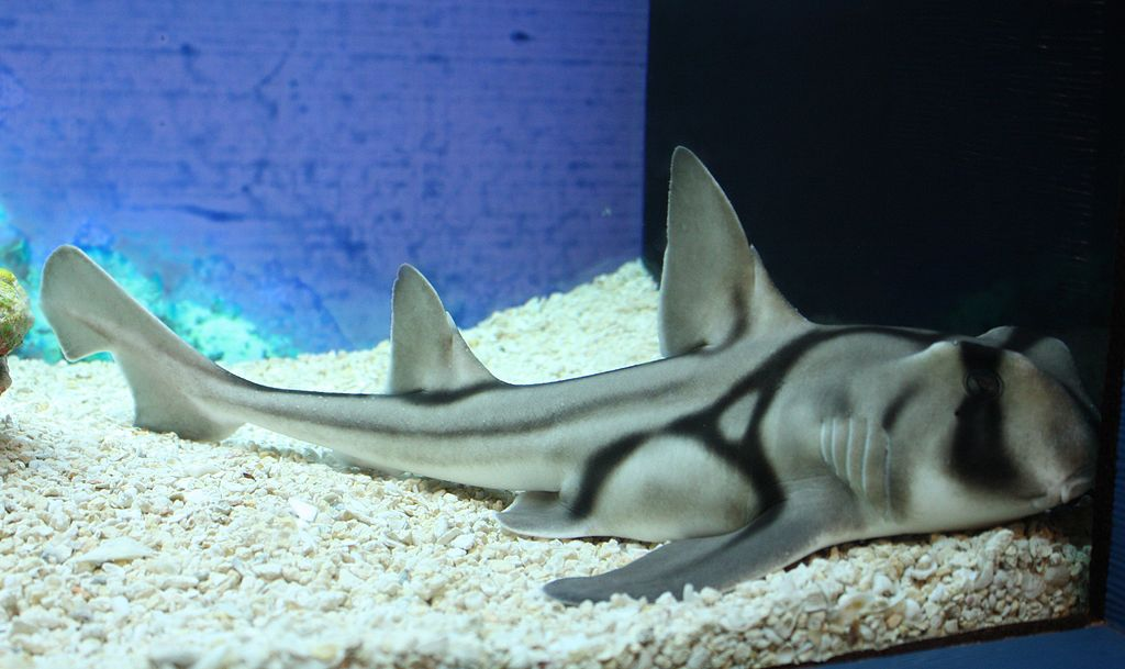haaien houden van jazz