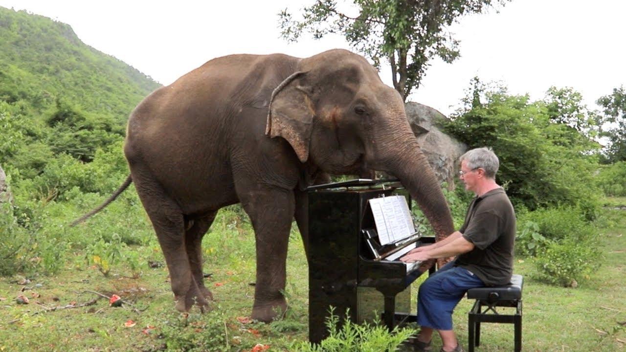 concert voor een blinde olifant