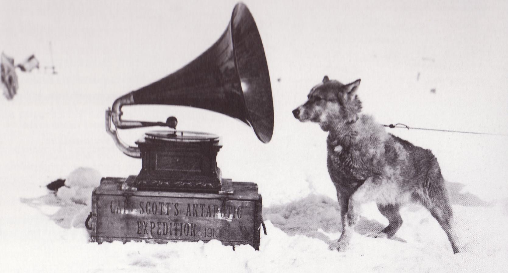 muziek voor honden