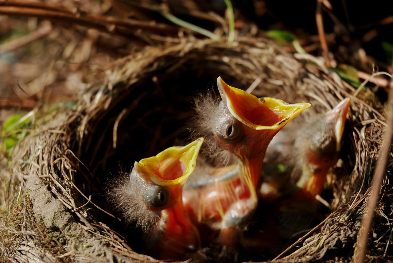 Fluitende vogels in Britse hitlijst